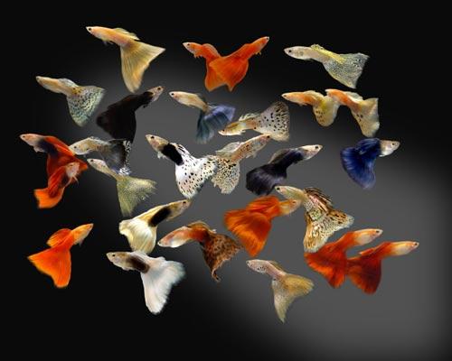 Добро пожаловать на сайт, посвящённый аквариуму и его обитателям!