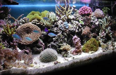 Коралловый Аквариум