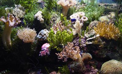 Аквариум Кораллового Рифа