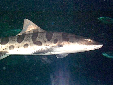 Акуловый аквариум