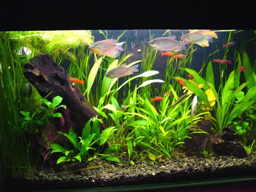 Read more. www.aquarium.spb.ru/ - Cached - SimilarСайт посвящен аквариумным рыбкам
