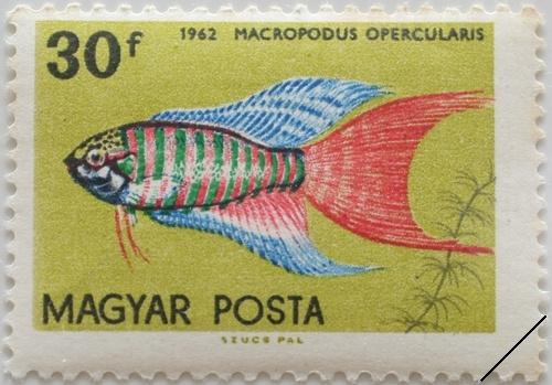 Почтовая марка с изображением макропода