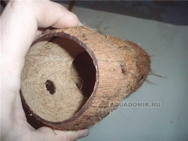 kokos_5