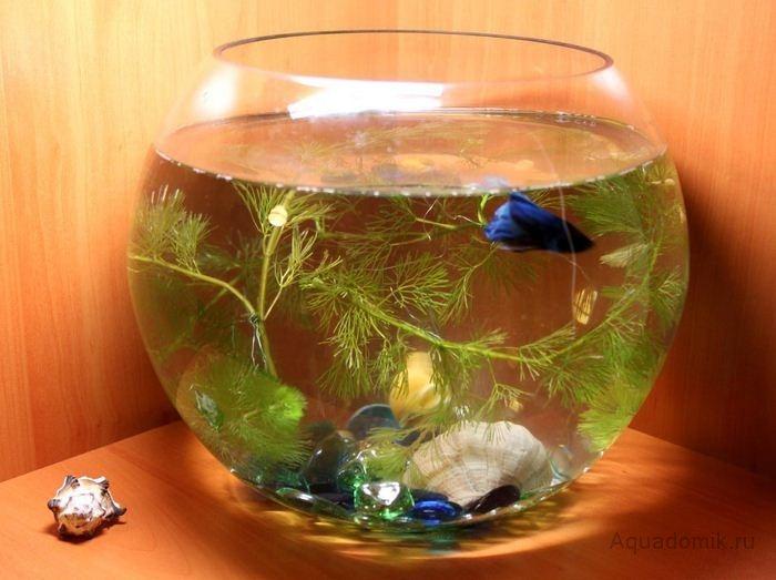 В планах аквариум на 10 литров больше