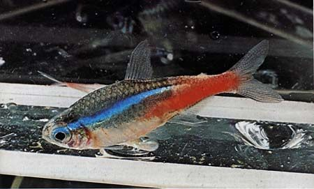 заболевание аквариумных рыбок фото
