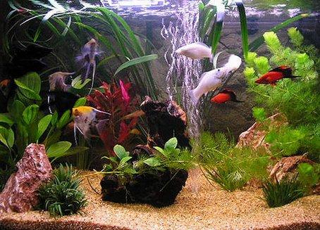 razmer-akvariuma