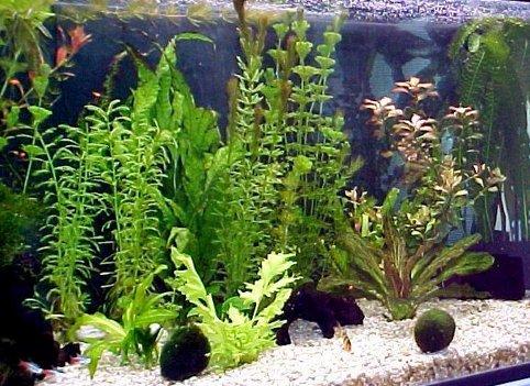 voda-dlya-akvariuma